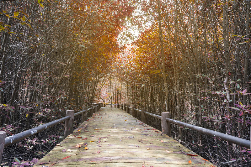 Surreal colors of Fantasy tropical jungle forest with Bridge in stock photography