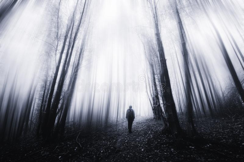 Surreal dark forest with fog and ghost walking through trees stock photos
