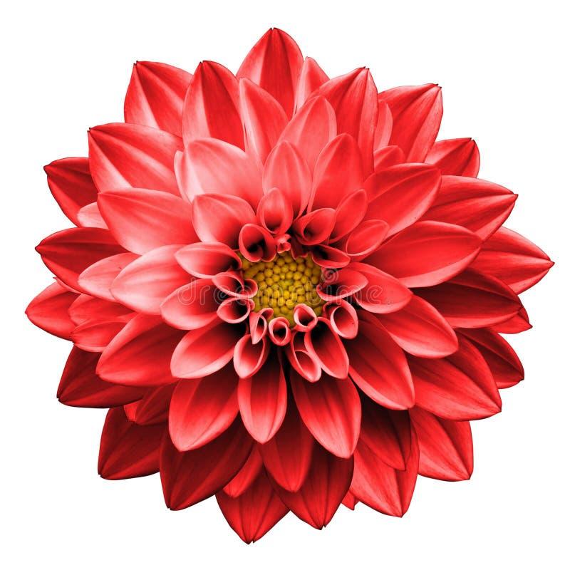 Surreal donkere geïsoleerde de dahliamacro van de chroom rode bloem royalty-vrije stock foto's