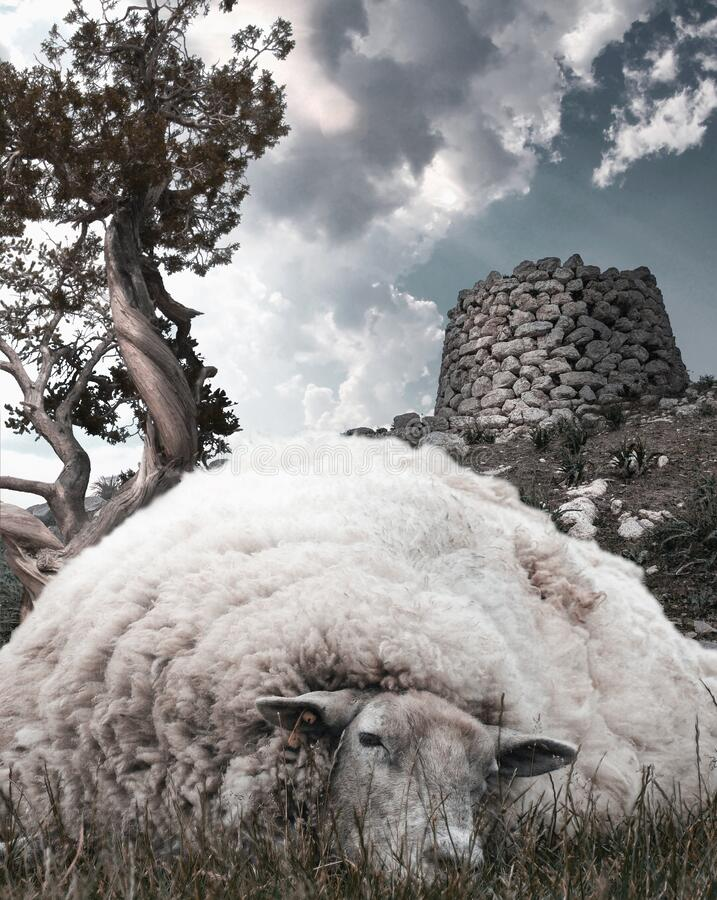 Surreal dreamy landscape in Sardinia with lazy sheep, Nuraghe and juniper tree stock photo