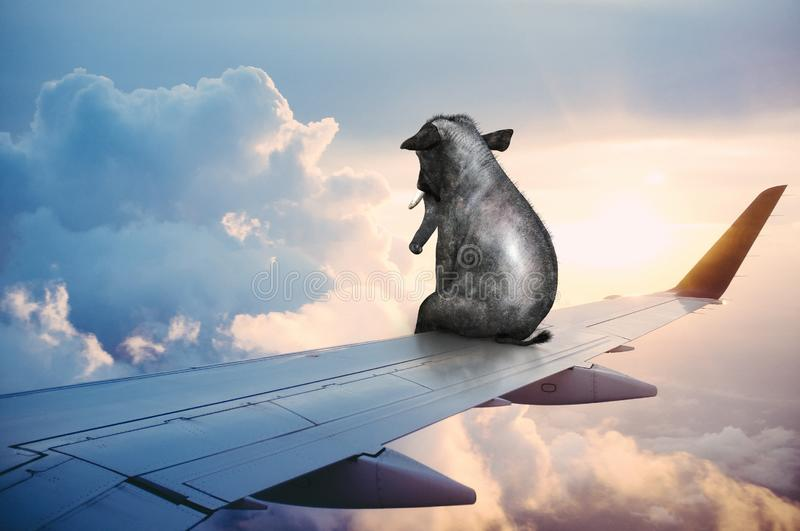 Surreal Elephant, Business Travel, Plane Wing royalty free stock images
