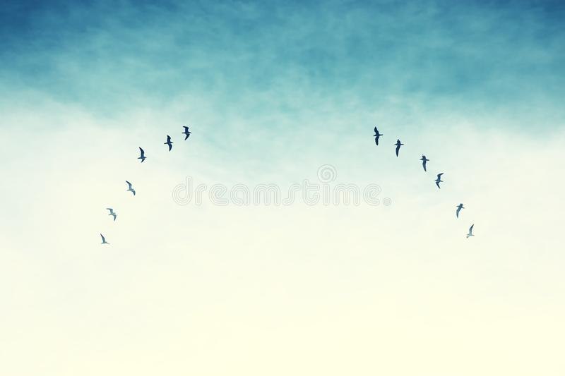 surreal enigmatic picture of flying birds . minimalism and dream concept royalty free stock photos