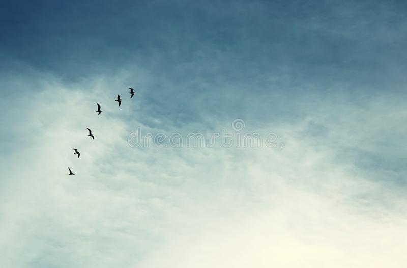 surreal enigmatic picture of flying birds . minimalism and dream concept. stock photos