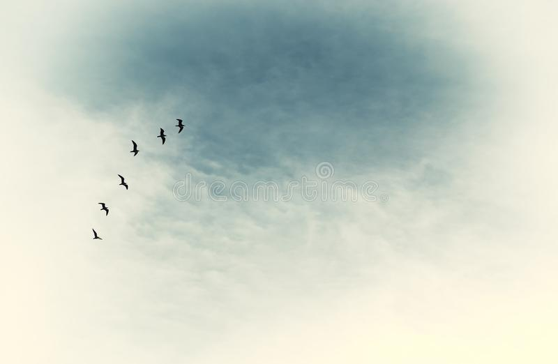 surreal enigmatic picture of flying birds . minimalism and dream concept. royalty free stock photo