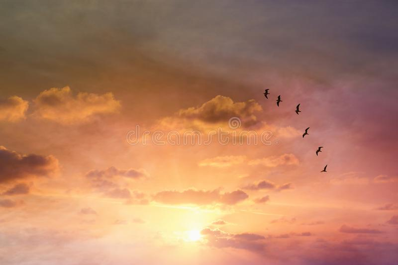 Surreal enigmatic picture of flying birds in sunset or sunrise sky . minimalism and dream concept. royalty free stock image