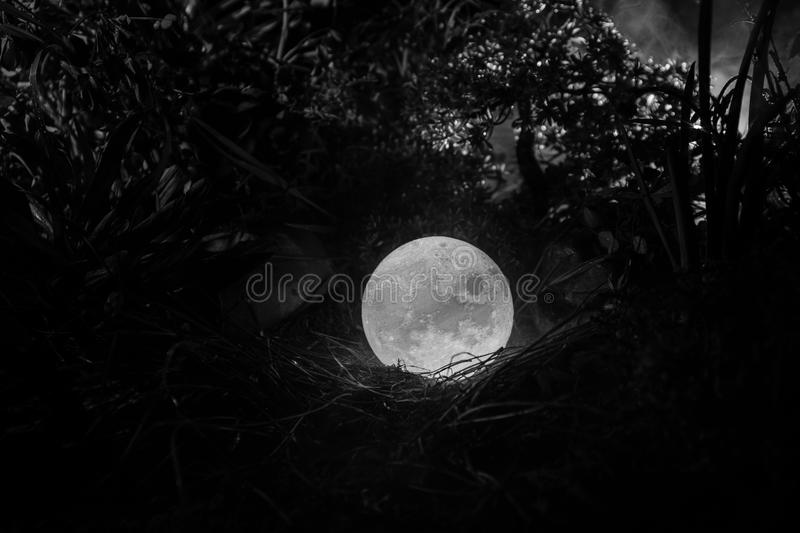 Surreal fantasy concept - full moon lying in grass. Decorated photo. Abstract fairy backgrounds . Selective focus royalty free stock images
