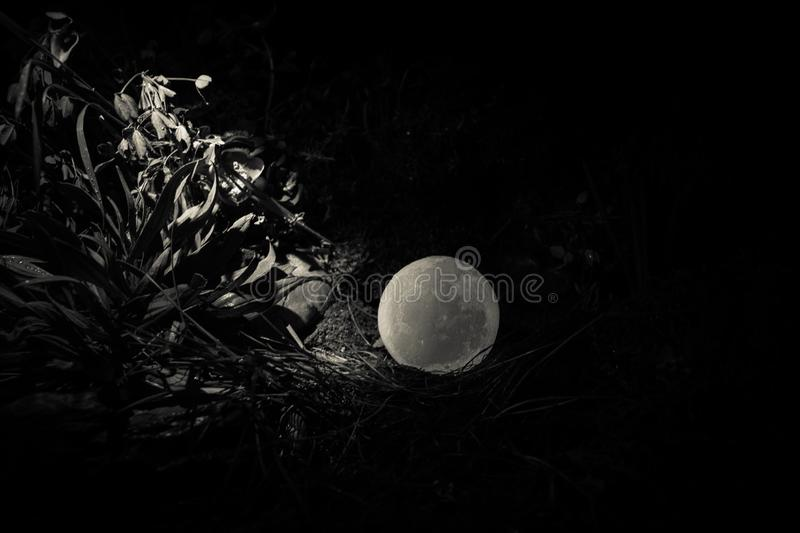Surreal fantasy concept - full moon lying in grass. Decorated photo. Abstract fairy backgrounds . Selective focus stock photo