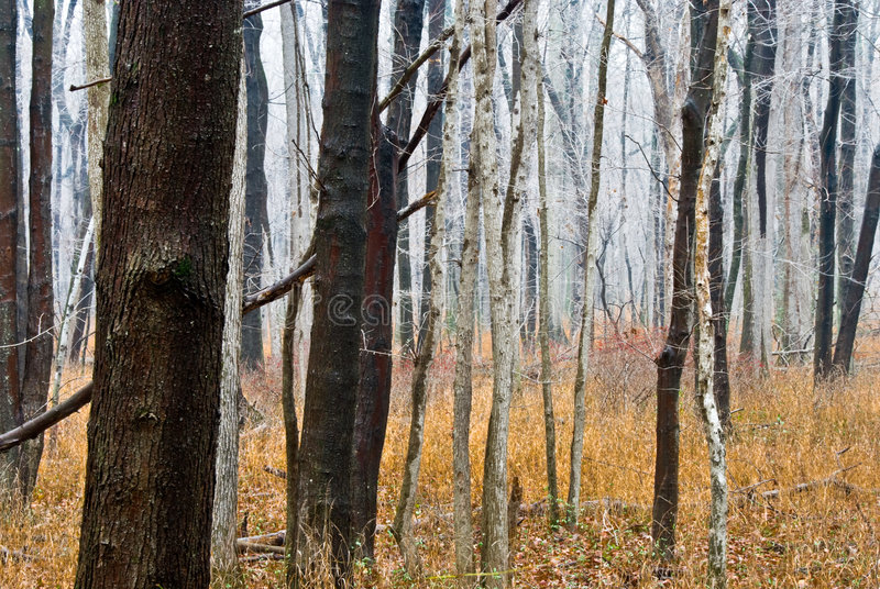 Download Surreal foggy forest stock image. Image of trees, grass - 4813773