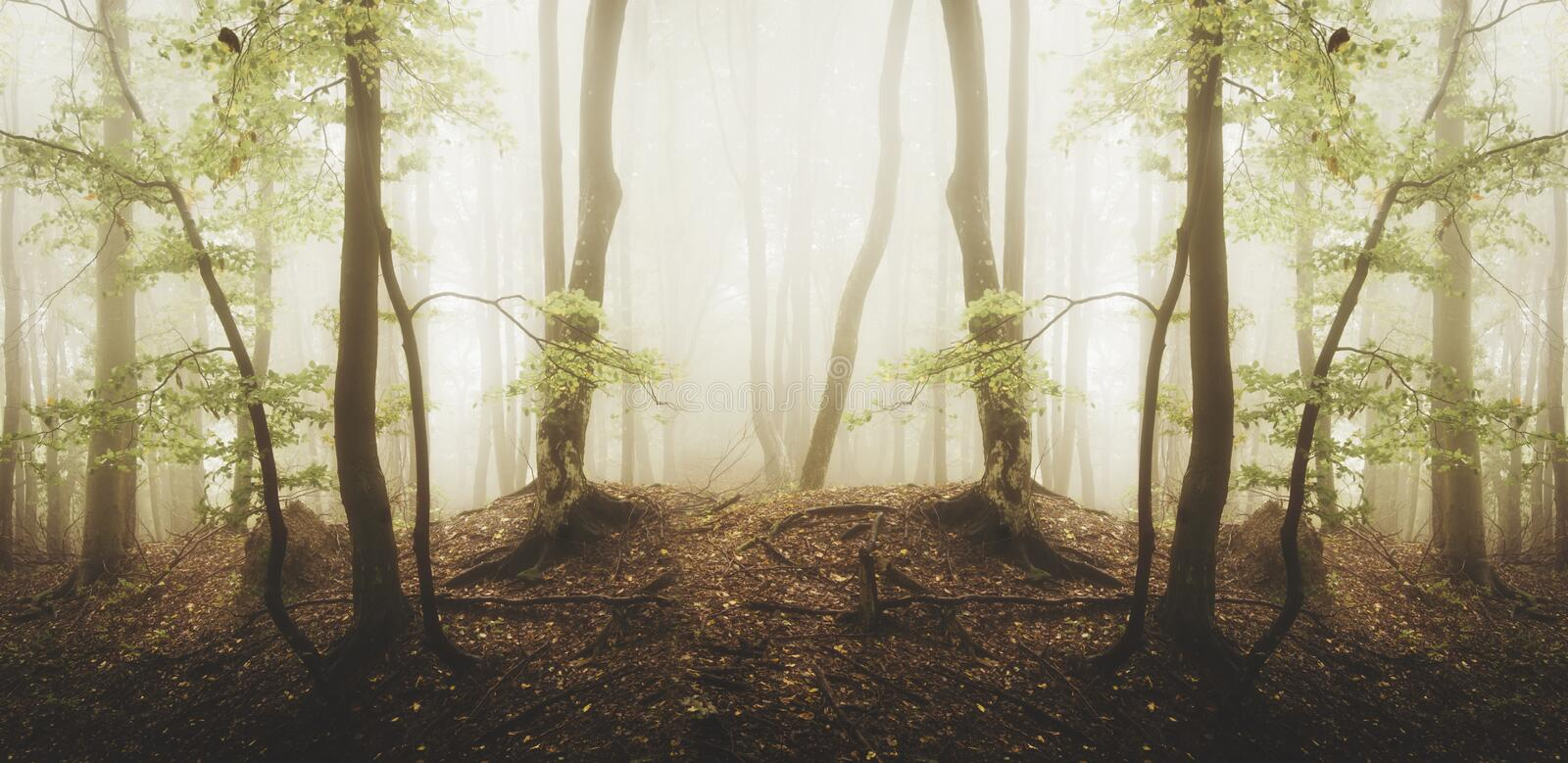 Surreal forest with fog and green foliage. Surreal symmetrical forest with fog and green foliage. Mysterious enchanted woods in Transylvania with thick fog stock photography