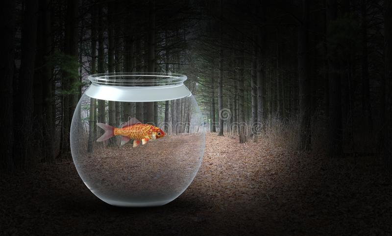 Surreal Goldfish, Woods, Forest, Nature royalty free stock image