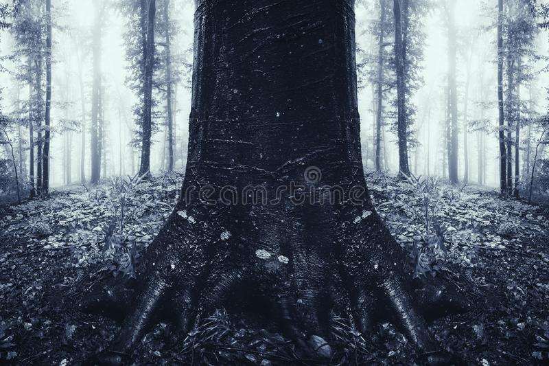 download symmetrical tree in surreal dark mysterious forest stock photo image of horror dark