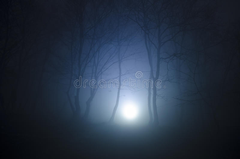 Surreal light in dark forest, Magic fantasy lights in the fairy foggy forest royalty free stock photography