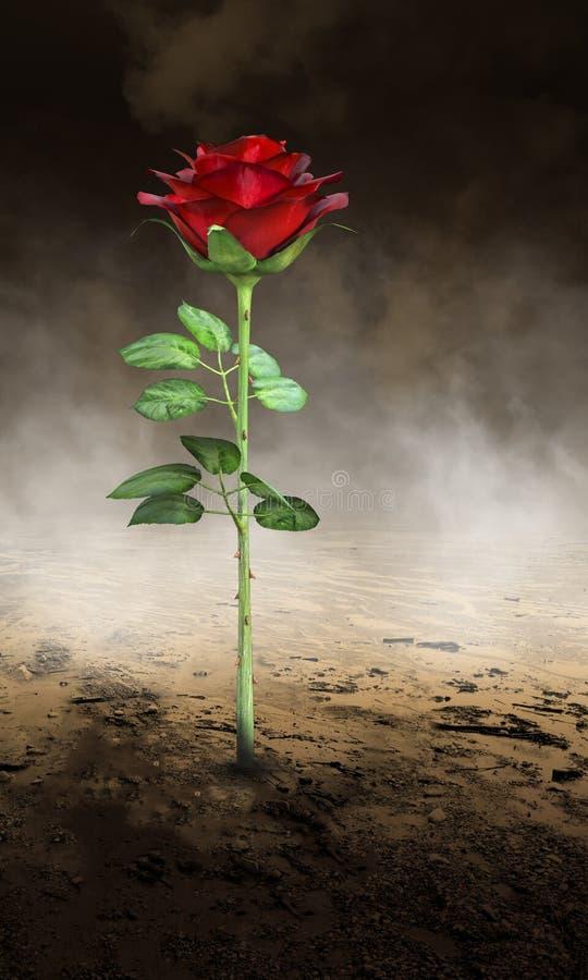 Free Surreal Love, Hate, Romance, Rose Stock Photo - 105597270