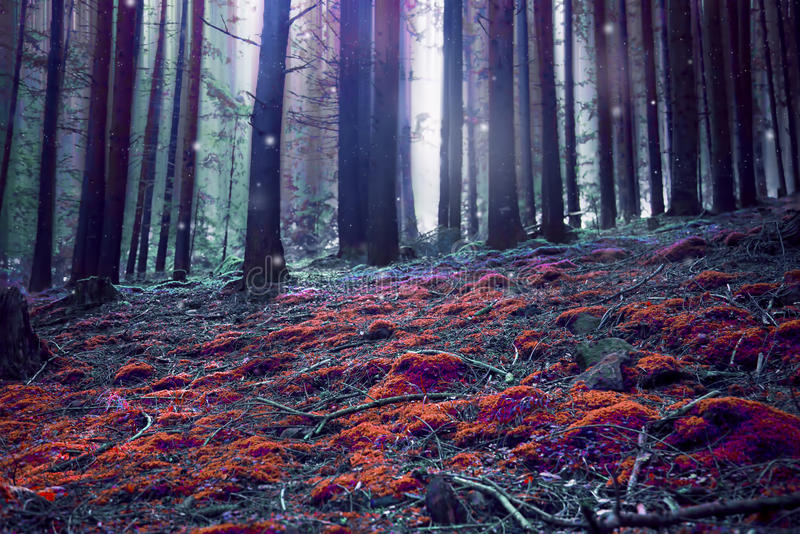 Surreal magic fantasy forest. Surreal magic fairytale forest scene with lights and red grass stock photos