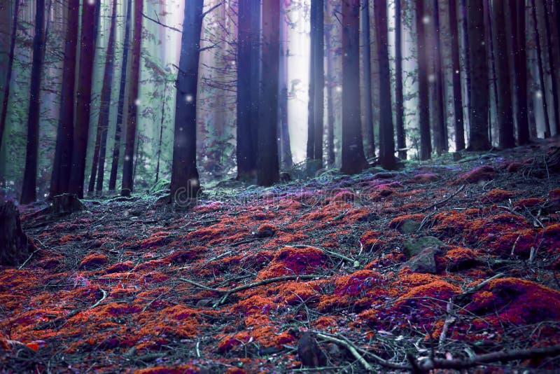 Surreal magisch fantasiebos stock foto's