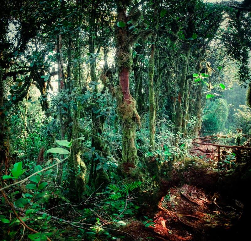 Surreal magisch van wild bos stock fotografie