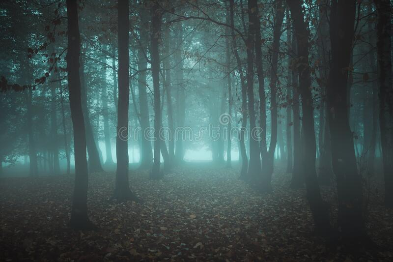 Surreal misty woods stock photography