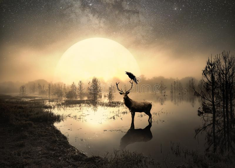 Surreal photo of a deer in a lake. Surreal photo of a deer in a central Florida lake in a dramatic sunset royalty free stock images