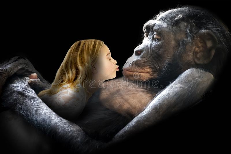 Love, Nature, Girl, Monkey, Kiss. Surreal scene of a young girl kissing a chimpanzee monkey in a loving embrace. Abstract concept for love, nature, friends stock photos