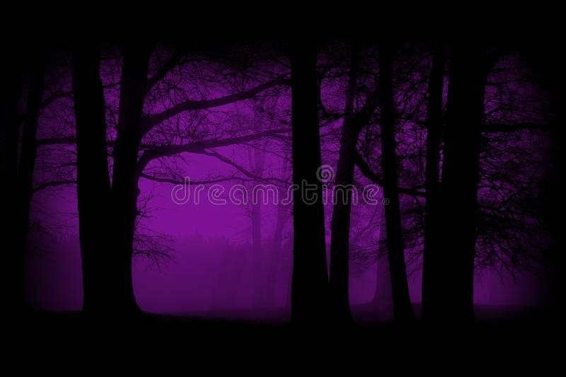 Purple, Violet Woods, Forest Background. Surreal soft scene of a woods or forest. The woodland landscape scene is done in a purple or violet color. Make for a royalty free stock photo