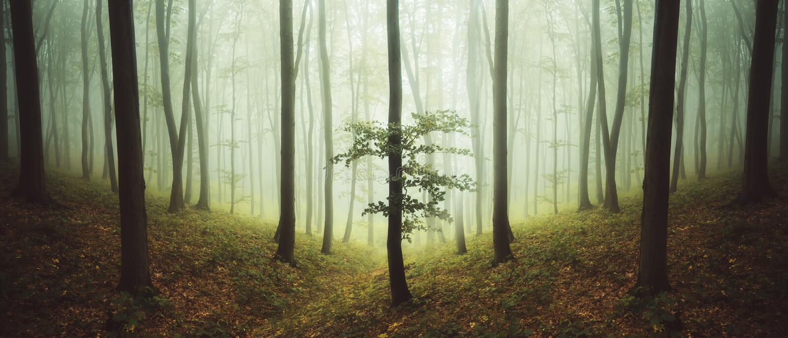 Surreal symmetrical forest with fog stock image