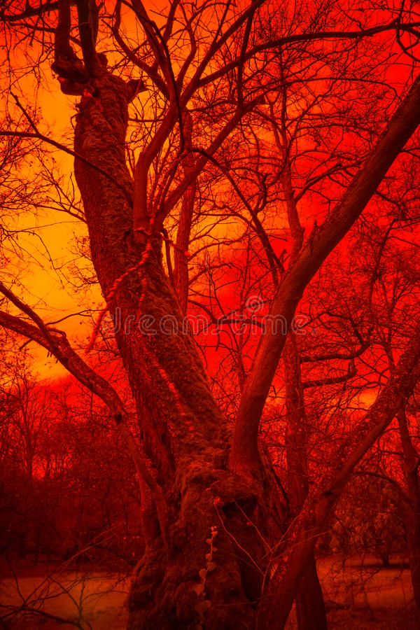 Surreal Tree. In red infernal fog, horror atmosphere. Effect obtained with infrared filter stock photography