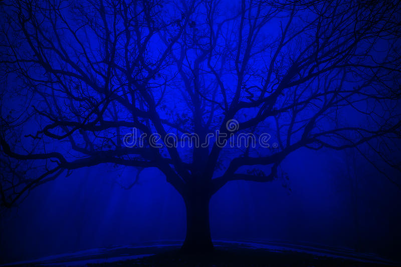 Surreal Tree in Winter Blue Fog royalty free stock image