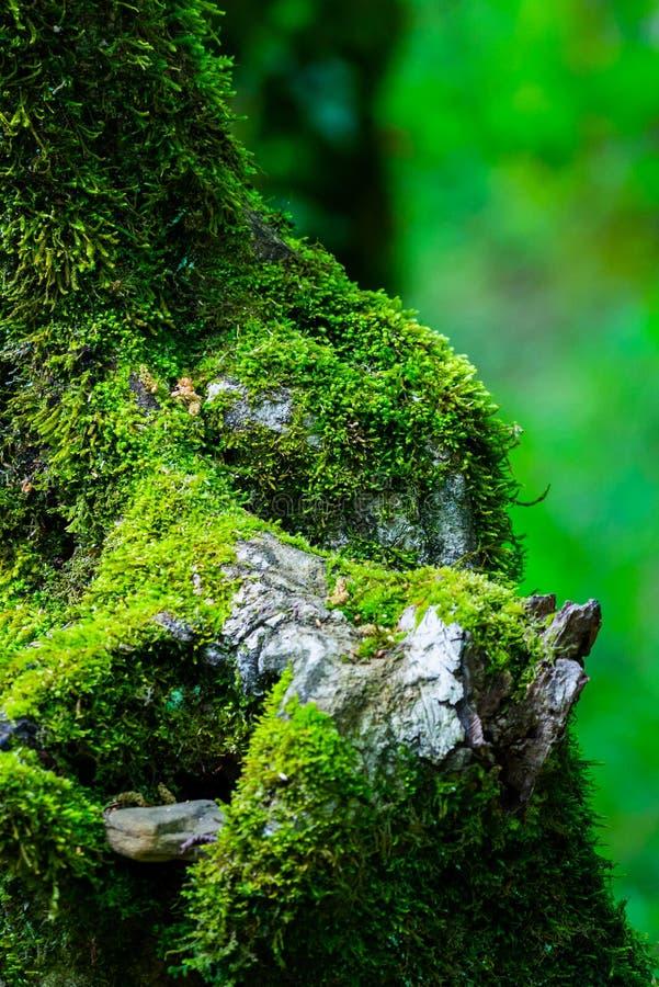 Surreal van de griezelige openluchtbeeld de fantasiekleur van de fairytale fijne kunst van oude boom, dat met mos, gebladerte, ma stock afbeelding