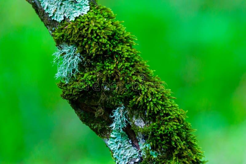 Surreal van de griezelige openluchtbeeld de fantasiekleur van de fairytale fijne kunst van oude die boom, met mos, gebladerte, ma stock afbeelding