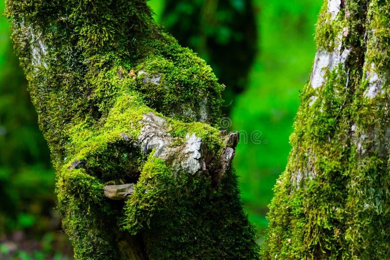 Surreal van de griezelige openluchtbeeld de fantasiekleur van de fairytale fijne kunst van oude die boom, met mos, gebladerte, ma royalty-vrije stock afbeeldingen