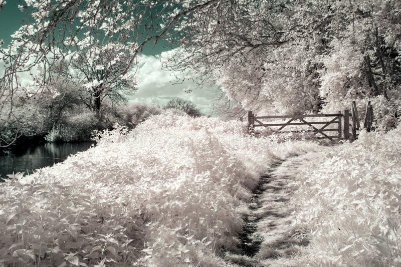 Surreal vibrant alternative colour infrared English countryside. Surreal alternative colour infrared English countryside landscape stock photography