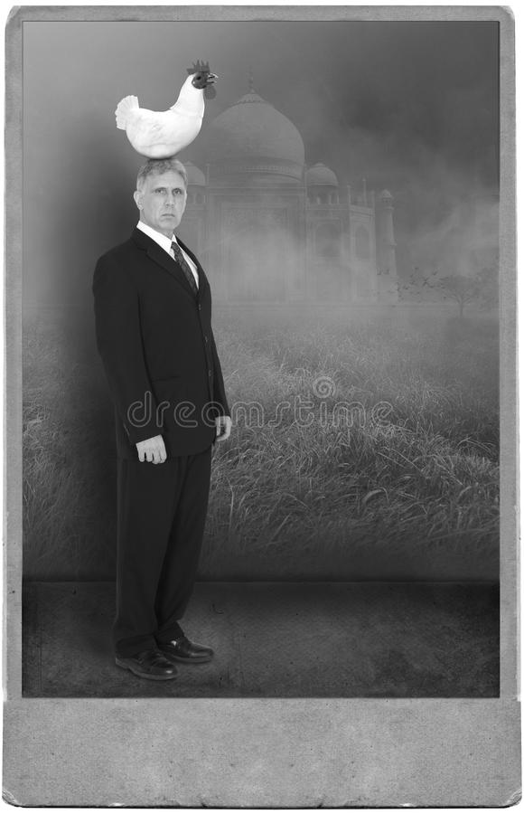 Surreal Vintage Man, Chicken, Funny Portrait stock images