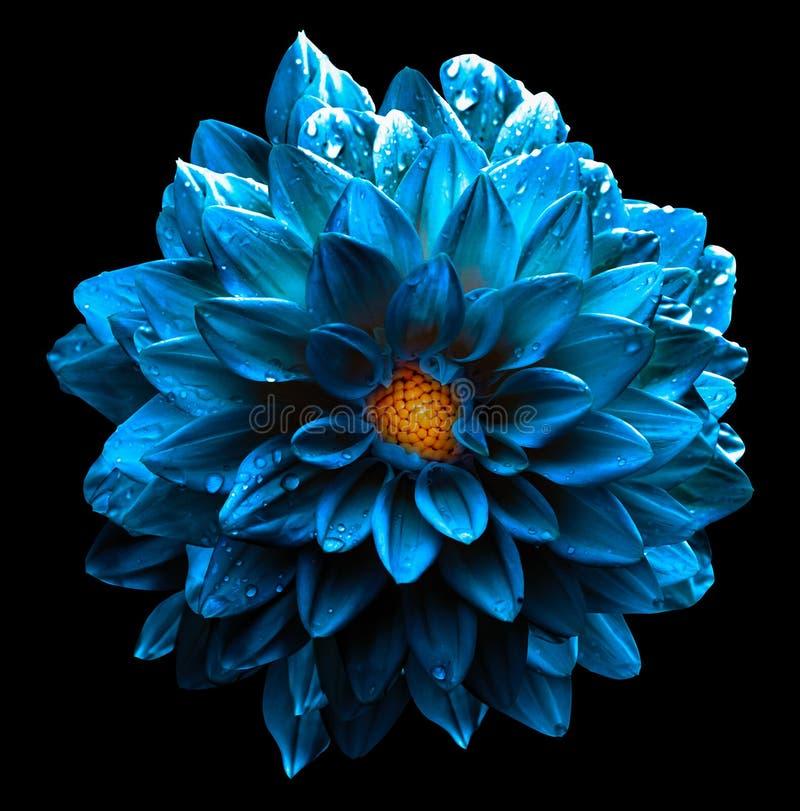 Surreal wet dark chrome sea blue flower dahlia macro isolated stock photo