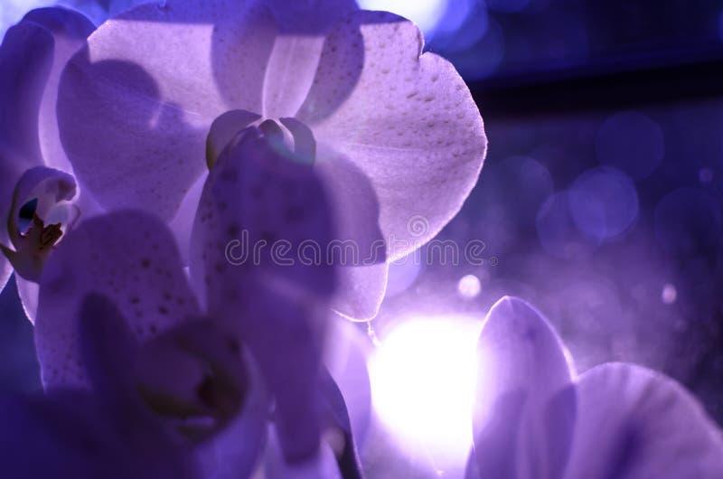 Surreale Makroblumenorchidee in den purpurroten Farben stockfoto
