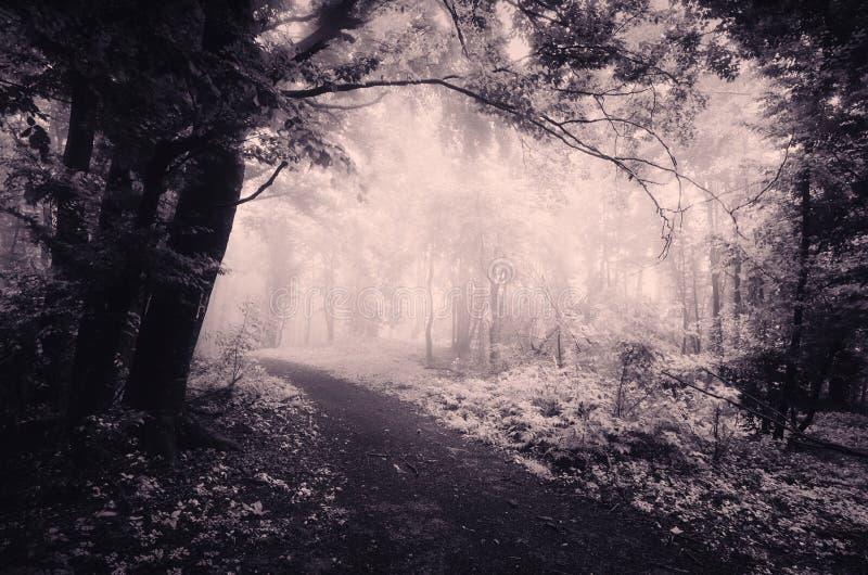 Surreale Waldszene mit Infrarotlicht und Nebel stockfotos