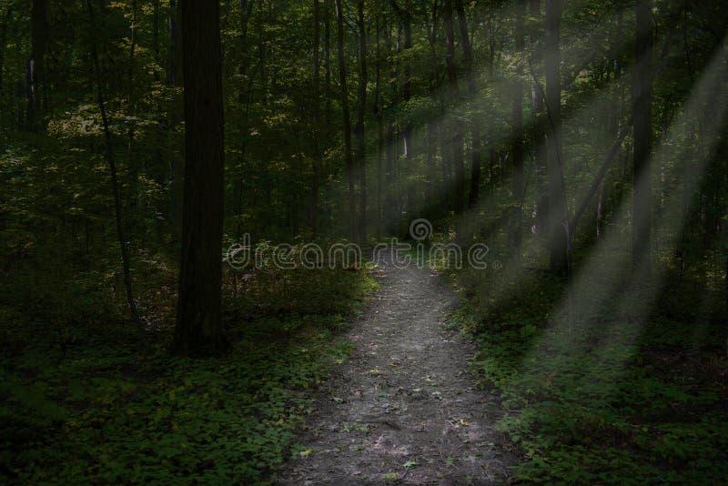 Surrealer dunkler Waldweg, Holzhintergrund lizenzfreies stockbild