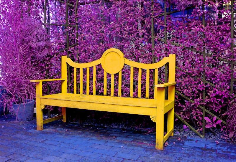 Surrealer Knall Art Style Yellow Wooden Bench im purpurroten farbigen Garten lizenzfreie stockbilder