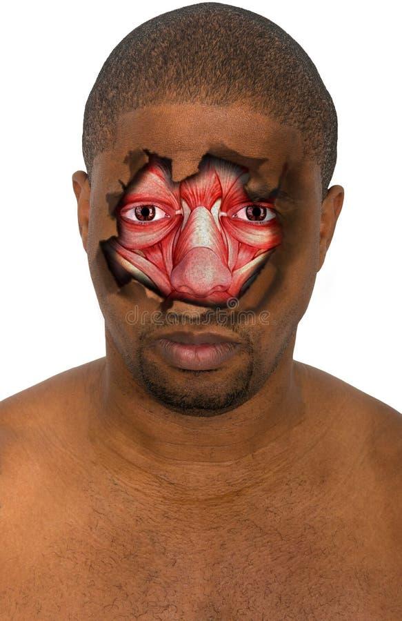 Surreales Gesicht, Mann, Muskel, lokalisiert stockbilder