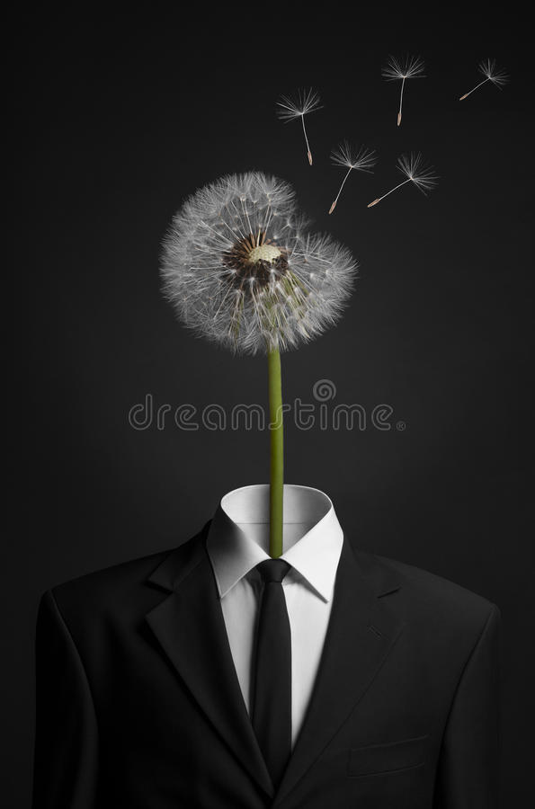 Surrealism and business topic: dandelion flower head instead of a man in a black suit on a dark background in the studio. Surrealism and business topic royalty free stock photography