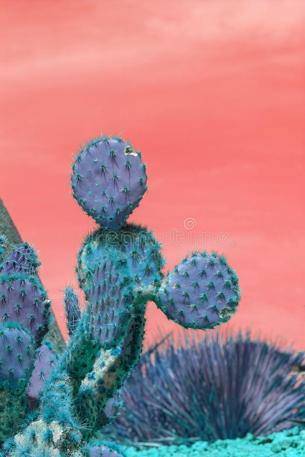 Free Surrealistic Abstract Blue Thorny Cactus Against Pink Orange Sky Royalty Free Stock Image - 145880076