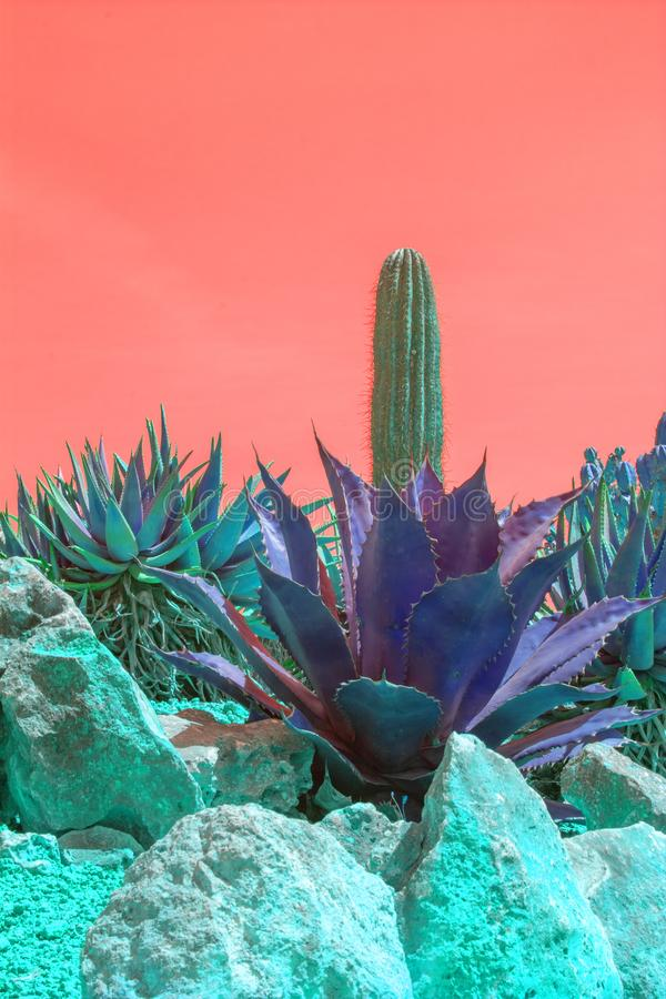 Surrealistic abstract purple color cactus orange sky royalty free stock image