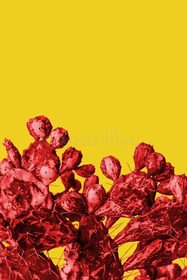 Surrealistic red cactus on a yellow background in a trendy minimalist style.  royalty free stock photography