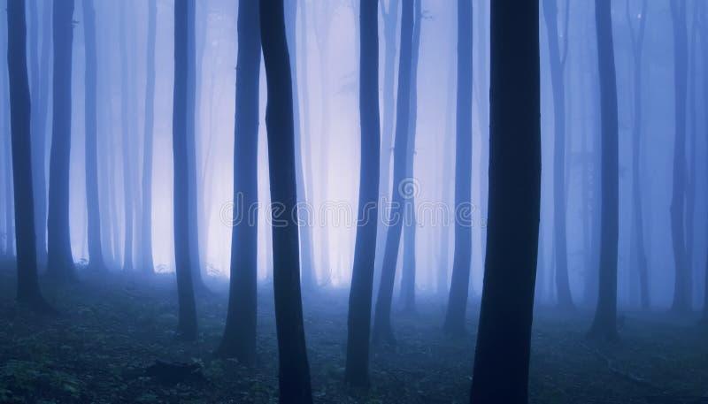 Surrealistyczna fotografia las z mgłą zdjęcia stock