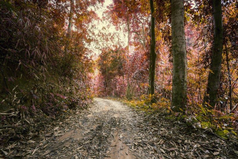 Surrealistyczni kolory fantazi dżungli tropikalny las z drogą w th zdjęcia royalty free