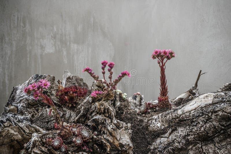 Surrealistyczni kwiaty w fiołkowych kolorach patrzeje obcego fotografia royalty free
