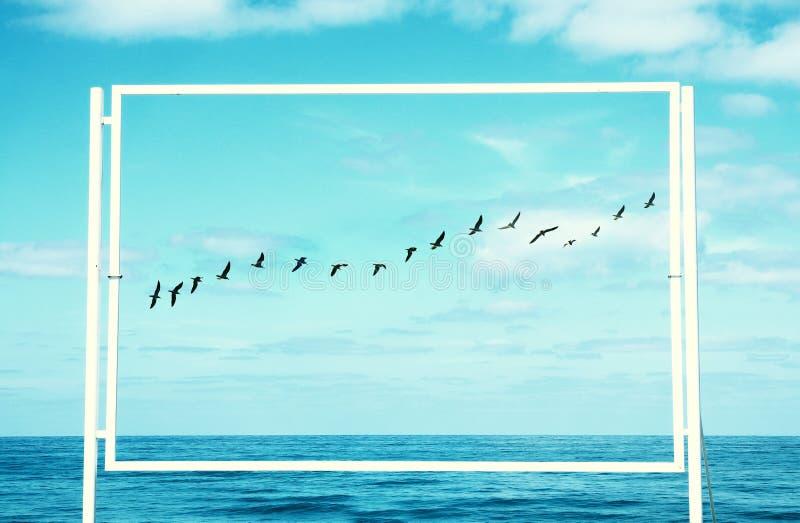 surrealistyczny enigmatyczny obrazek latający ptaki i rama plażowy krajobrazu zdjęcia royalty free