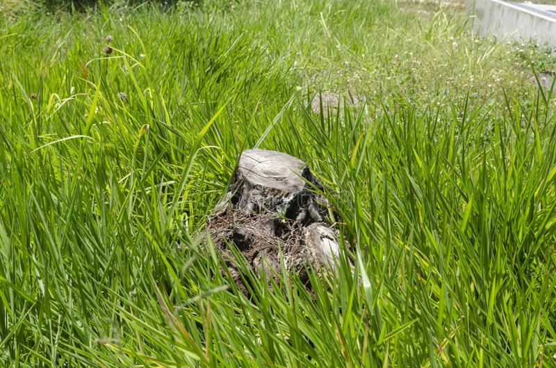 Dried Tree Stump Among Grass stock photos
