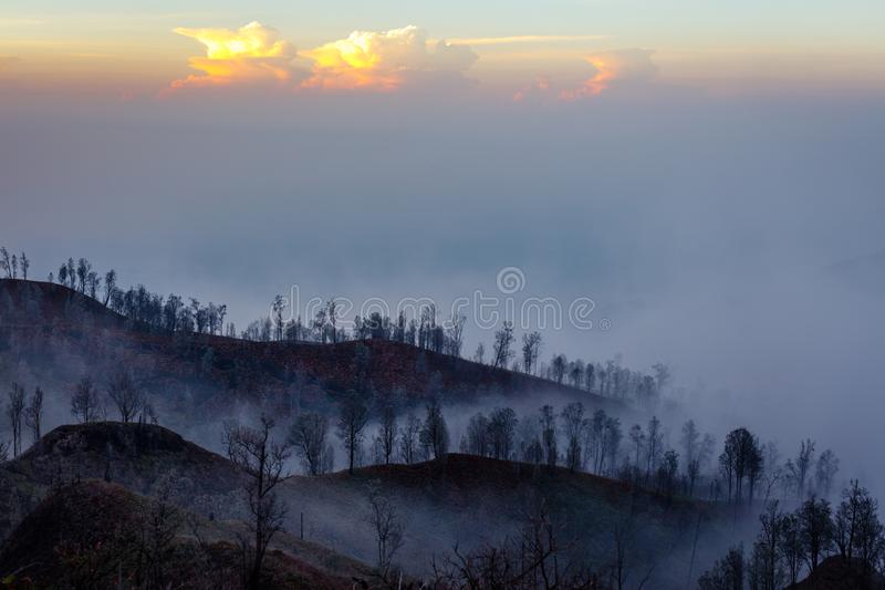 Surroundings of Ijen volcano. Trees through fog and sulfur smoke. Banyuwangi Regency of East Java, Indonesia. Surroundings of Ijen volcano in the early morning stock images