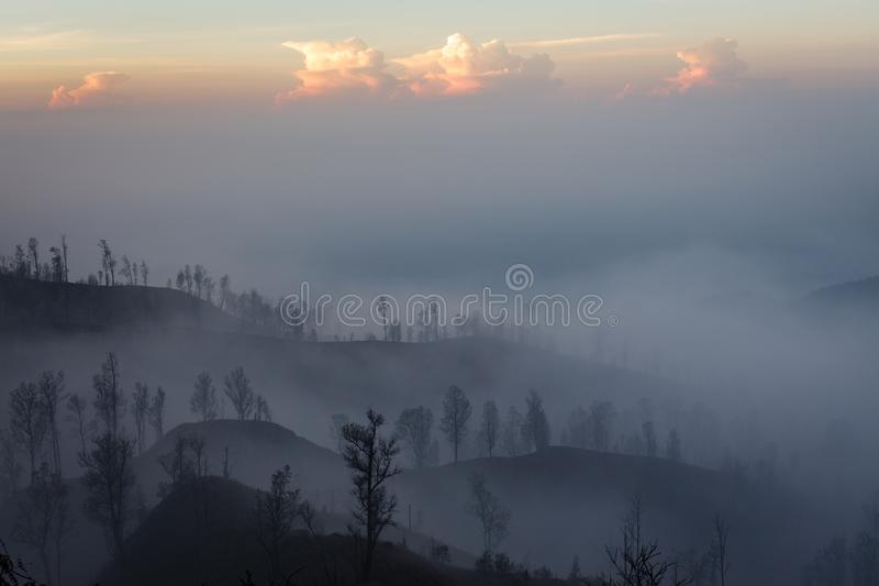 Surroundings of Ijen volcano. Trees through fog and sulfur smoke. Banyuwangi Regency of East Java, Indonesia. Surroundings of Ijen volcano in the early morning stock image