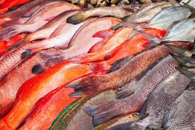 Surtido colorido de los pescados frescos, Malasia imagenes de archivo